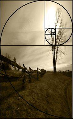 FibonacciCurve2_batfield  Interesting article to read
