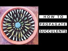 How to Propagate Succulents - YouTube