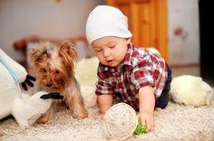 Собаки и дети