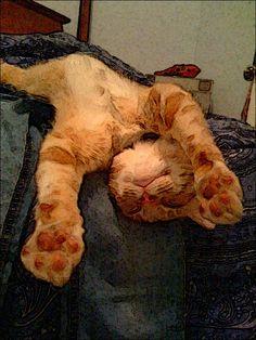 Sleep tight Little Kitty