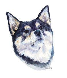 Portrait of a Shiba inu - watercolour
