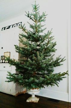 Use a vintage urn as a chic tree stand. I wonder if I could make this work with my artificial tree somehow.