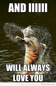 Romantic Tiger ♥
