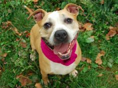 TO BE DESTROYED 10/05/16 **ON PUBLIC LIST** A volunteer writes: This adorably cheerful gal is too mature to be a Miss and far too much fun to be a Ma'am, Madame really does suit her and she's ready to play, snuggle and just plain flirt her way into your heart the minute she meets you! Sure, her in-kennel attitude tends toward the vocal, but that's only because she's so excited to find a new friend and once out and about Madame is a perfect little lady. She takes care of business tout suite…