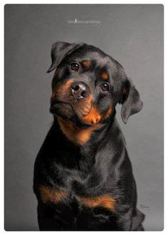Best dog Breeds of all time The Pet's Planet. Cozy cottage loves Rotties.