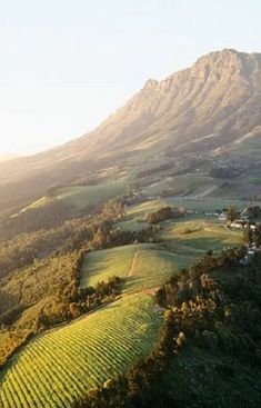 Man Behind Alta Alella Vineyards Stellenbosch wine farms - South Africa. South Africa has the longest wine route in the world. Silvester Trip, South Afrika, Le Cap, Paris Match, Cape Town South Africa, Destination Voyage, Out Of Africa, Africa Travel, Belle Photo