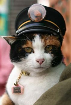 Tama, the train station cat :) by bside