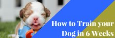 Tips on how to train your dog to be obedient in 6 weeks