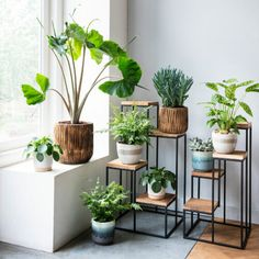 Idea Of Making Plant Pots At Home // Flower Pots From Cement Marbles // Home Decoration Ideas – Top Soop Indoor Garden, Indoor Plants, Home And Garden, Small Home Offices, Decoration Plante, House Plants Decor, Office Plants, Plant Shelves, Plant Design