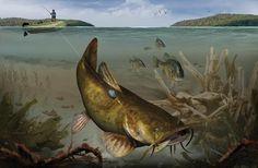 Smoke a Flattie: Gear and Tactics for Big Flathead Catfish Big Catfish, Catfish Bait, Catfish Fishing, Crappie Fishing, Fishing Lures, Fishing Boats, Gone Fishing, Best Fishing, Fishing Tips