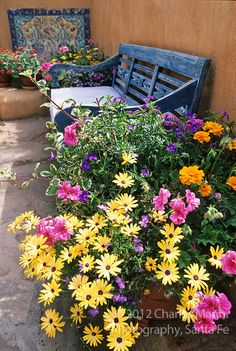 Susan Blevins of Taos, New Mexico, created an elaborate home garden featuring containers, perennial beds, a Japanese themed path and a regional style that reflectes the Spanish and pueblo architecture of the area. Bright yellow flowers in containers contrast with a faded blue benchand a mosaic in the front patio of Susan Blevin's garden.