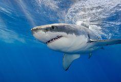 「Shark」の画像検索結果