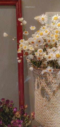 Daisy Wallpaper, Vintage Flowers Wallpaper, Flower Background Wallpaper, Soft Wallpaper, Scenery Wallpaper, Cute Wallpaper Backgrounds, Wallpaper Iphone Cute, Pretty Wallpapers, Phone Wallpapers