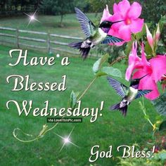 Have A Blessed Wednesday God Bless! good morning wednesday hump day wednesday quotes good morning quotes happy wednesday good morning wednesday wednesday quote happy wednesday quotes religious wednesday quotes wednesday quotes for family and friends Wednesday Greetings, Wednesday Hump Day, Blessed Wednesday, Happy Wednesday Quotes, Good Morning Wednesday, Good Morning Good Night, Good Morning Quotes, Happy Friday, Wonderful Wednesday