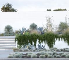 olive trees and rosemary - Google Search