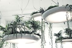 Babylon Light Fixture by Object Interface // a plantable light fixture, absolutely epic! Plant Lighting, Outdoor Lighting, Jardiniere Design, Sky Garden, Grow Lights, Hanging Plants, Hanging Succulents, Hanging Lights, Indoor Garden