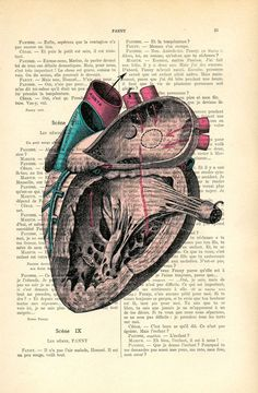 anatomic heart dictionary print  book page  by MadameMemento, $7.99