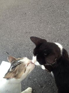 Cute Little Animals, Baby Animals, Funny Animals, Kittens Cutest, Cats And Kittens, Cute Cats, Cat Couple, Cat Aesthetic, Pretty Cats