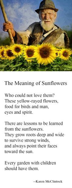 Poem: The Meaning of Sunflowers -- by Karen McClintock.