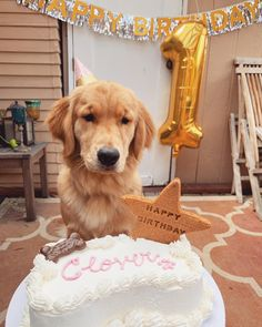 Happy Birthday to my baby girl Clover! Dog First Birthday, Puppy Cake, Dog Bakery, Happy 1st Birthdays, Puppy Party, Birthday Pictures, Hades, My Baby Girl, Dog Mom