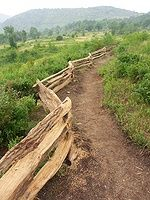 Ashville, NC hikes: Graveyard Fields (moderate, 3.2 miles, hilly)