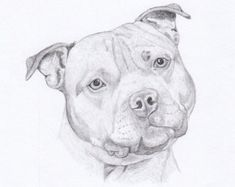 staffordshire bull terrier pencil drawings - Google Search
