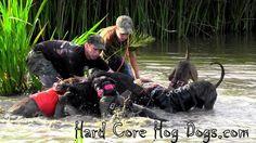 Hard Core Hog Dogs  www.hardcorehogdogs.com