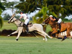 A world-class polo club on Barbados is attracting novices with a new offering: tailored holidays to learn polo.