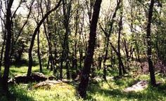 En el cortejo florístico aparecen especies como el pino carrasco y el pino piñonero, lasabina, el madroño, etc. En las zonas más húmedas aparece el quejigo; en suelos silíceos aparece el alcornoque.