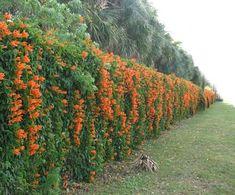 flowering plants for green fence design