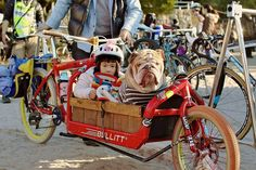 Funny pets in bikes compilations. 15 pets that show us the little pleasure of riding a bike, with a pet perspective. Laugh, and enjoy riding! Dog Trailer, Bike Trailer, Tricycle, Tai Chi, Bullitt Cargo Bike, Funny Animals, Cute Animals, Funny Pets, Biking With Dog