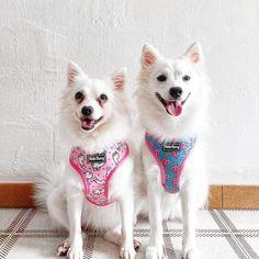 Singapore | Dog Harness | Personalized Dog Bandana | Custom Bowtie Cat Bow Tie, Bandana Bib, Pet Tags, Dog Harness, Dog Accessories, Singapore, Husky, Dog Cat, Pets