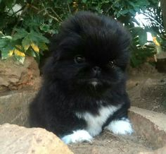 So adorable....this is what I want!!!!