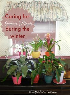Tips and Tricks for caring for indoor plants during the fall and winter  http://thegardeningcook.com/indoor-plants-winter-care/