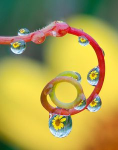 Morning dew Photograph  - Morning dew Fine Art Print - Tom Biegalski