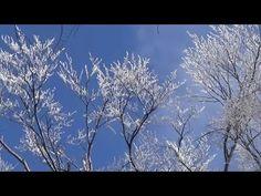 Asher Quinn (Asha) ~ Ice-trees in the Pilis Mountains