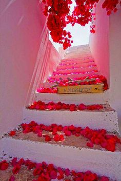 Architecture Discover Bougainvillea blossoms in Santorini Greece. For my best friend Jenn who loved bougainvillea. Rosa Pink Stairway To Heaven Santorini Greece Paros Greece Santorini Island Paros Island Santorini Travel Color Rosa Pink Color Beautiful World, Beautiful Places, Beautiful Stairs, Amazing Places, Stairway To Heaven, Belle Photo, Stairways, Dream Big, Pretty In Pink