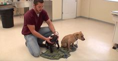Two Puppies With Demodex Recover After Recieving Pro Bono Treatment via LittleThings.com