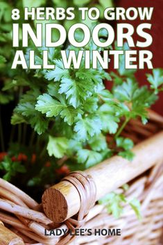 Indoor herb gardening is easy with these 8 herbs. Click to learn how you can have a simple yet productive indoor herb garden. #indoorherbgarden #herbgardening Growing Herbs In Pots, Easy Herbs To Grow, Herbs Indoors, Homestead Survival, Do It Yourself Projects, Raising Chickens, Herbal Medicine, Compost, Real Food Recipes