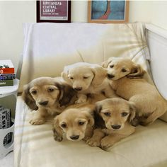 Blankets Cobertor Warmth Soft Plush Five Cute Puppies Looking At The Camera Brother Dog Sofa Bed Throw Blanket Thick Thin Plaid