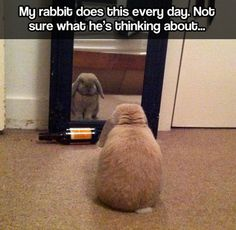 Introspective bunny // funny pictures - funny photos - funny images - funny pics - funny quotes - #lol #humor #funnypictures