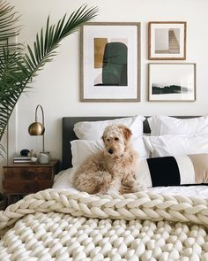 Sunday mornings around here 💛 Guest Bedroom Decor, Guest Bedrooms, Home Bedroom, Mid Century Bedroom, My New Room, Interior Design Living Room, Home Furnishings, Decoration, Home Decor