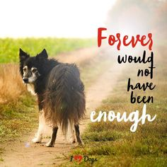 Some Helpful Ideas For Training Your Dog. Loving your dog does not mean you are willing to let him go hog wild on your possessions. That said, your dog doesn't feel the same way. Westies, Dachshunds, I Love Dogs, Cute Dogs, Miss My Dog, Dog Poems, Pet Remembrance, Dog Memorial, Old Dogs