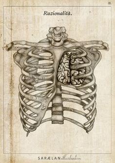 """Rationality"" from ANATOMY LESSONS by Saraelan Donati, via Behance #illustration #anatomy #drawings"
