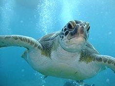 Dive or Snorkel with the Turtles in Tenerife
