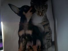 Dog + Cat = Kiss