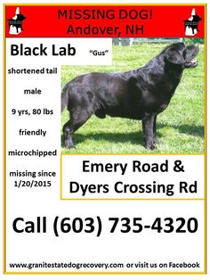 "Granite State Dog Recovery Liked · January 21 ·     Missing in Andover NH – ""Gus"" is a male Black Lab, shortened tail (about 6"" long), 9 years, 80 pounds, friendly. He is microchipped. Missing since 1/20/2015 from Emery Road and Dyers Crossing Road. Please share Gus' flier. Call (603) 735-4320 with sightings."