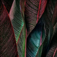 beauty of leaves color and texture Patterns In Nature, Textures Patterns, Color Patterns, Nature Pattern, Print Patterns, Pattern Print, Natural Forms, Natural Texture, Leaf Texture