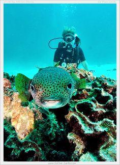 Scuba Diving with Go Dive Lanta, Ko Lanta, Krabi, THAILAND. www.godive-lanta.com www.facebook.com/godivelanta.gdl