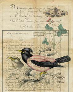Botanical Print  Pink Bird